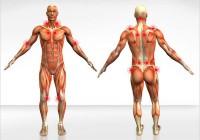 A atividade física e as dores musculares