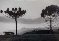 AMECampos realiza exposição do fotógrafo paulista Cristiano Mascaro