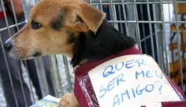 Feira de Adoção de Cães acontece em Campos do Jordão no dia 6