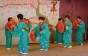 Festa da Cerejeira em Flor começa neste fim de semana