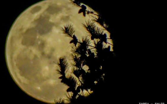 """Céu """"abriu"""" e eclipse lunar + super lua serão vistos de Campos do Jordão em diversos pontos da cidade. [Que as nuvens não voltem hoje!]"""