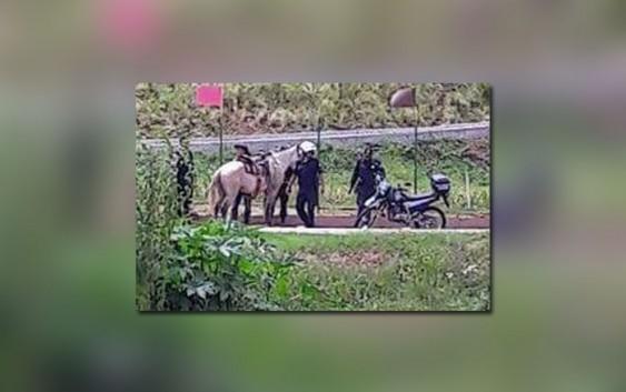 Guarda Municipal contém cavaleiro embriagado em Campos do Jordão; Protetores dos animais consideram maus tratos.