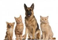 Campos do Jordão: Prefeitura irá esterilizar 102 animais no fim de semana