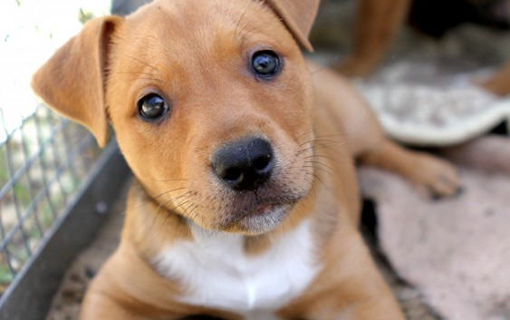 Vem aí a 2ª Campanha de Castração de Cães AMECampos amando os animais!