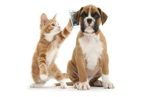 Aplicativo da causa animal será apresentado neste final de semana em Campos do Jordão