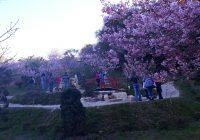 Campos do Jordão – Uma explosão de cores e a Festa da Cerejeira em Flor