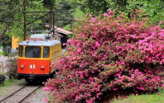 Redescubra Campos do Jordão na estação das flores! Viva a primavera!