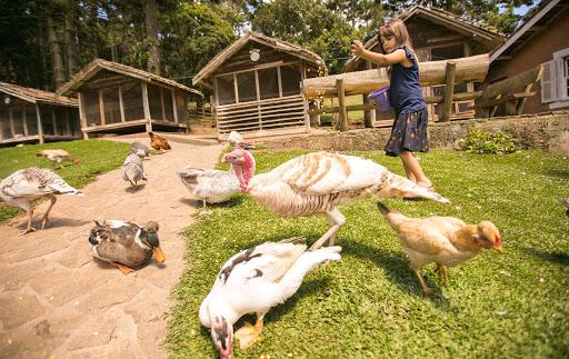 Diversão garantida para crianças na Fazendinha Toriba